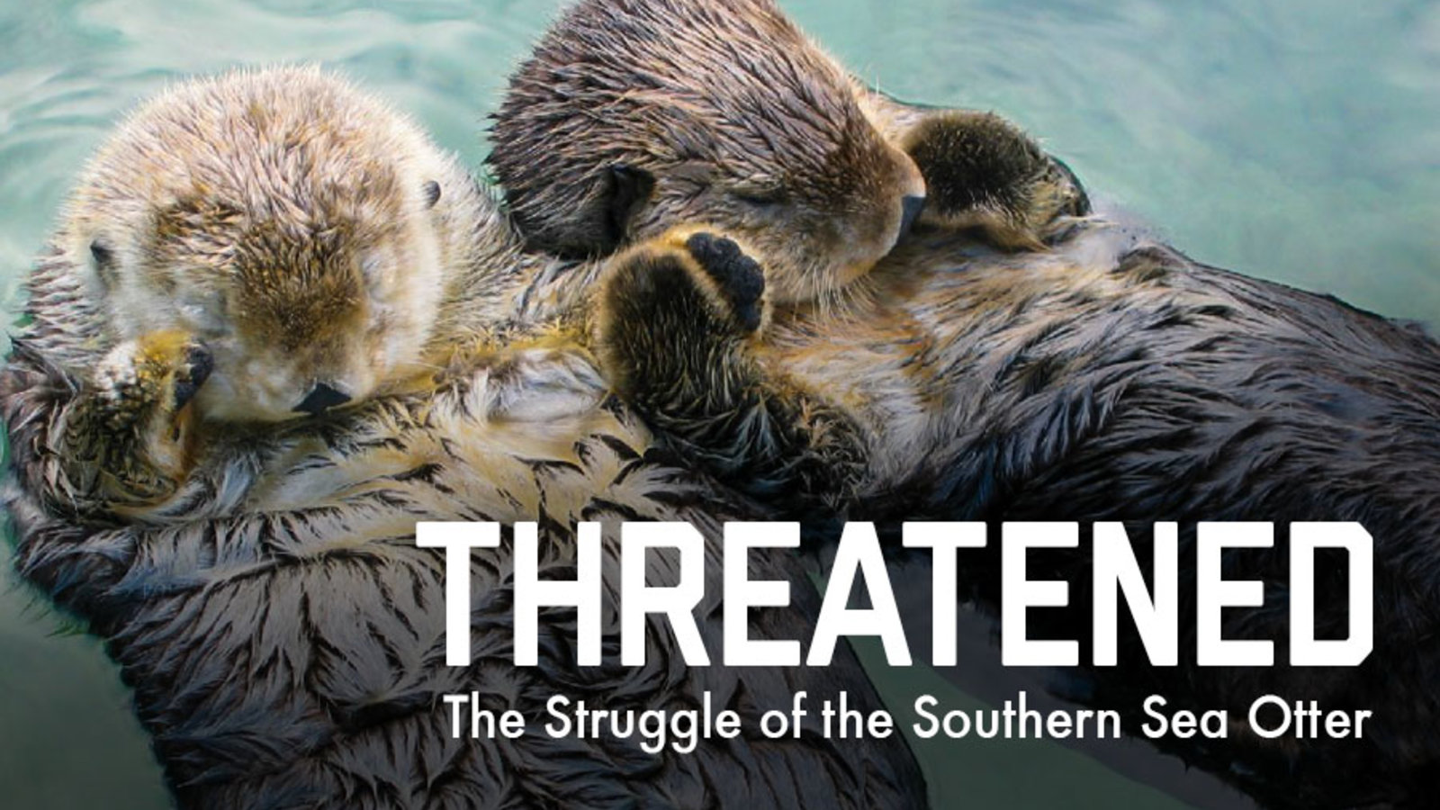 Threatened: The Struggle of the Southern Sea Otter