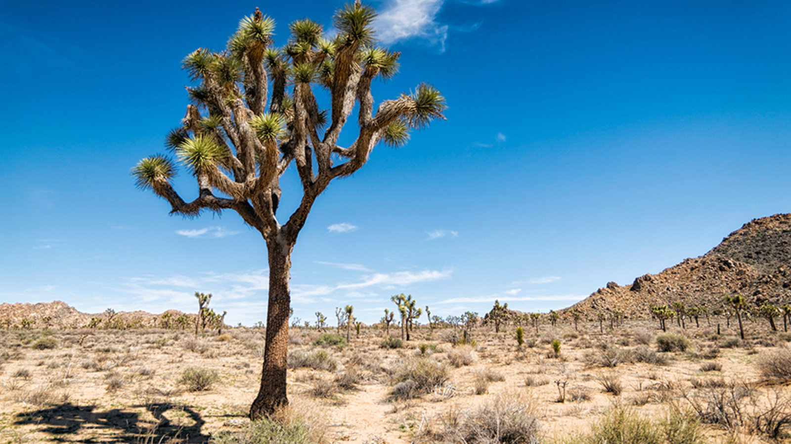 The Desert Bonanza of Plant Shapes