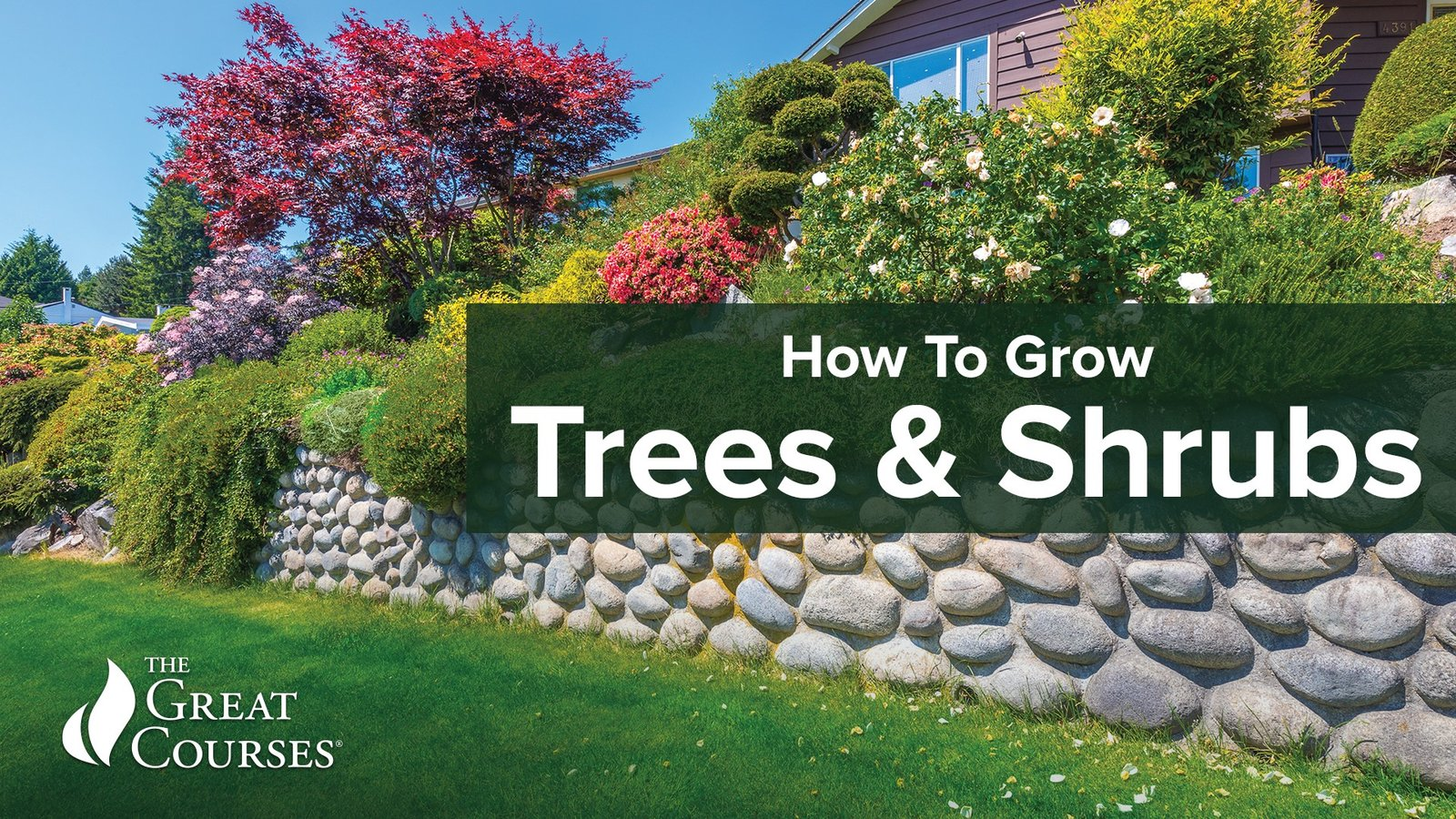 How to Grow Anything: Trees and Shrubs
